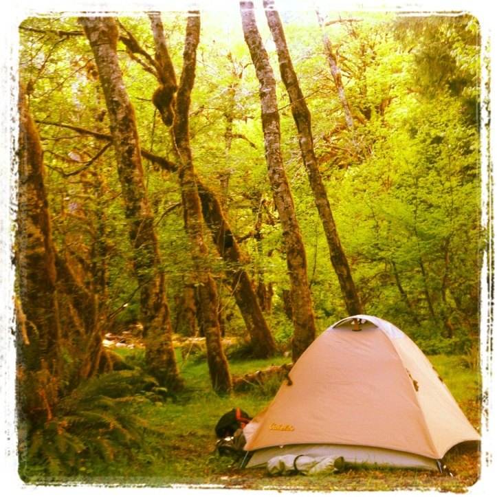 Mt. Tom Creek Campground Hoh river trail Olympic National Park